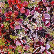 Frost On Autumn Tundra Poster
