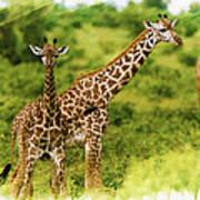 Mom Giraffe And Little Joey Poster