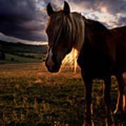 Golden Horse  Poster