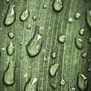 Green Leaf Abstract With Raindrops Poster by Elena Elisseeva