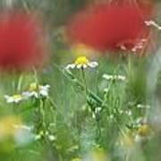 Hidden Flower Poster