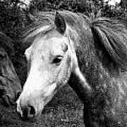 Horses Poster by Thomas Leon