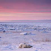 Hudson Bay Landscape Poster