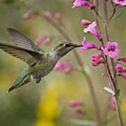 Hummingbird Heaven  Poster