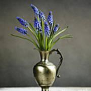 Hyacinth Still Life Poster