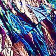 Hydroquinone Crystals In Polarized Light Poster