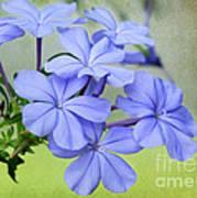 I Love Blue Flowers Poster