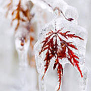 Icy Winter Leaf Poster