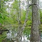 Jean Lafitte Swamp Poster