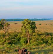 Kenya, Maasai Mara, Hot Air Ballooning Poster