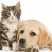 Labrador And Forest Cat Poster