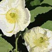 Large White Flowers Abstract Poster