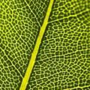 Leafy Details Poster