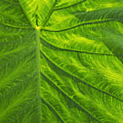 Leafy Green Poster