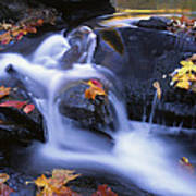 Leaves In Little River Great Smoky Poster