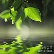 Leaves Over Water Poster