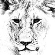 Lion Portrait Poster