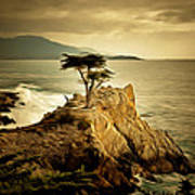 Lone Cypress Detail 2 Poster
