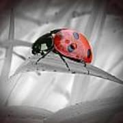 Lone Ladybug Poster