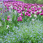 Longwood Gardens, Spring Flowers Poster
