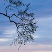 Low Angle View Of Tree At Dawn, Dark Poster