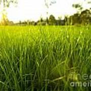 Lush Grass Poster