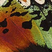 Madagascan Sunset Moth Wing Detail Poster