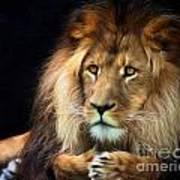 Magnificent Lion Poster
