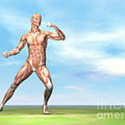 Male Musculature In Fighting Stance Poster