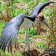 Marabou Stork Poster
