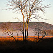 Marsh Tree Reflections Poster