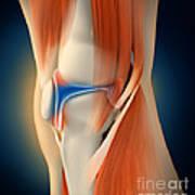 Medical Illustration Showing Poster