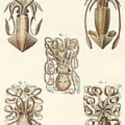 Molluscs Or Soft Worms Poster