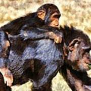 Mother Chimpanzee With Baby On Her Back Poster