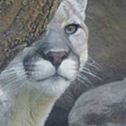 Mountain Lion Painterly Poster
