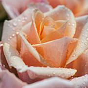 My Birthday Rose 1 Poster