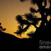 New Photographic Art Print For Sale Joshua Tree At Sunset Poster