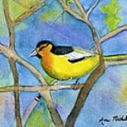 Northern Oriole Poster