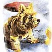 Norwich Terrier Fire Dog Poster