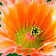 Orange Cactus Flower Poster