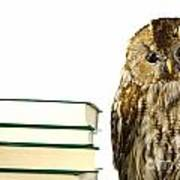Owl At A Book Pile Poster