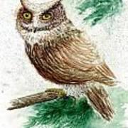 Owl Study Poster