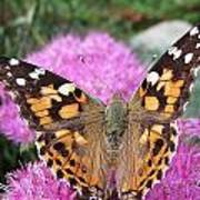 Painted Lady Butterfly Up Close Poster