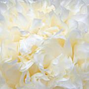 Pale Peony Petals Poster