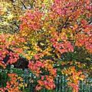 Pallette Of Fall Colors Poster