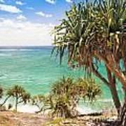 Pandanus Palm Tree Poster