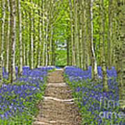 Path Through Bluebells Resembling Water Colour Poster