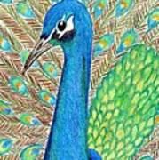 Peacock Poster by Carol Hamby