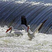 Pelican Drama Poster