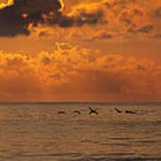 Pelican Sunrise Poster